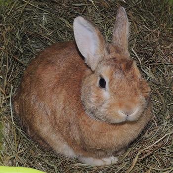 Wie können meine Kaninchen andere Kaninchen kennenlernen? (Tiere, Hund, Haustiere)